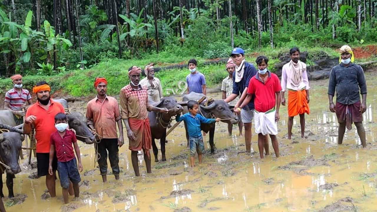 ಕೊರೊನಾ ಮಹಿಮೆ: ಮರಳಿ ಮಣ್ಣಿನ ಮಕ್ಕಳಾದರು ತುಳುನಾಡ ಕುಡಿಗಳು