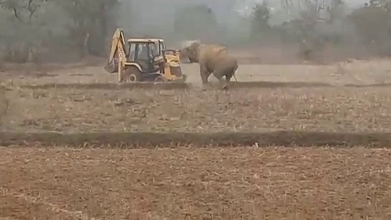 elephant attack in shimoga