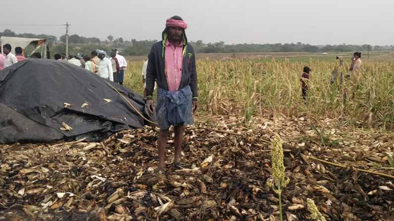 maize crop fire