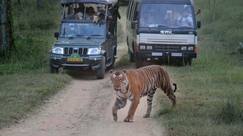 mysuru safari