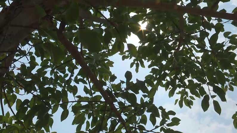 tree bagalkot