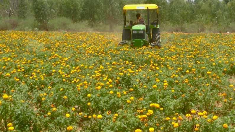 kolar crop