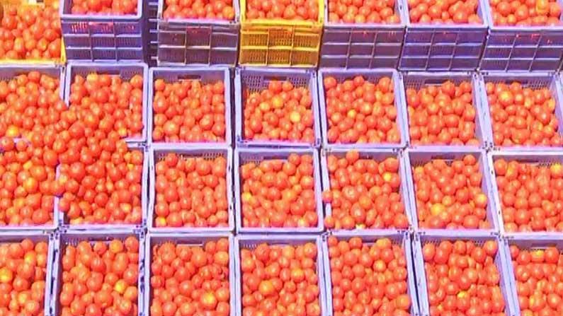 kolar tomato